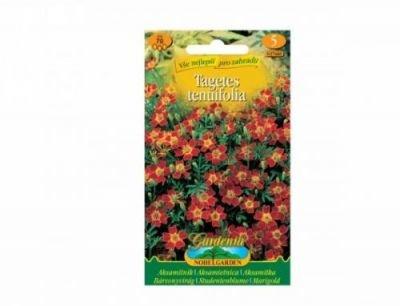 Aksamitník - tagetes tenuifolia