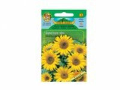 Slunečnice roční Yellow