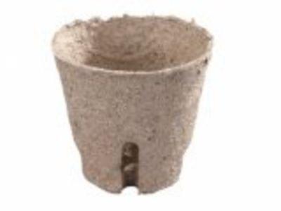 Květník rašelinový d6cm