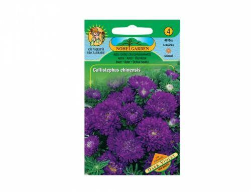 Astra nízká chryzantémokvětá Dark violet