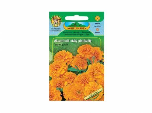 Aksamitník rozkladitý nízký Orange
